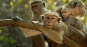 6.MonkeyKingdom