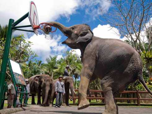 theres-a-park-in-bali-where-you-can-swim-and-play-basketball-with-elephants